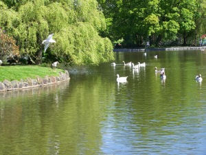 The boating lake in Aberdare Park